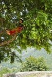 Mujer de Sindhupalchowk, Nepal fotografía de archivo
