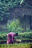 Mujer de Tharu que derrama las semillas en campos Imagen de archivo libre de regalías