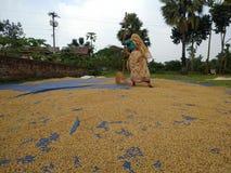 Mujer del aldeano en trabajos agrícolas fotos de archivo