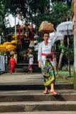 Mujer del Balinese que lleva la caja ceremonial con ofrendas en su cabeza, Ubud Foto de archivo