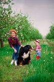 Mujer del bebé con el perro Berna en jardín de la primavera Imagenes de archivo