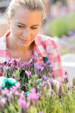 Mujer del centro de jardinería con la flor púrpura de la planta Foto de archivo