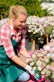 Mujer del centro de jardinería que mira abajo de las flores en conserva Fotografía de archivo