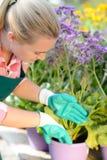 Mujer del centro de jardinería que planta las flores en conserva púrpuras Foto de archivo libre de regalías