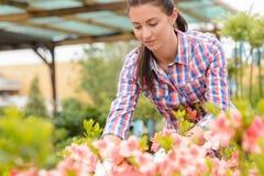 Mujer del centro de jardinería que trabaja en macizo de flores rosado Fotografía de archivo libre de regalías