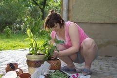 Mujer del día soleado que planta las flores Fotos de archivo