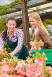 Mujer del jardinero que aconseja las plantas de compra del cliente Imágenes de archivo libres de regalías