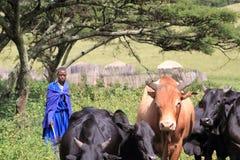 Mujer del Masai ocuparse su ganado imágenes de archivo libres de regalías