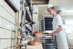 Mujer del panadero que sale el pan del horno de panadería imagen de archivo