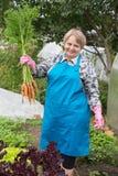 Mujer del pensionista con la zanahoria en el huerto Fotos de archivo libres de regalías