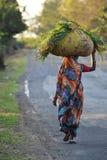 Mujer del segador de la hierba en la India Foto de archivo libre de regalías