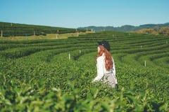 Mujer del viaje que camina en planta de té en Chiang Rai Tailandia imagen de archivo