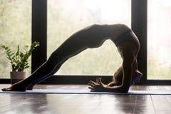 Mujer deportiva joven que hace ejercicio del puente del codo fotografía de archivo
