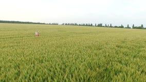 Mujer dos con el pelo rubio en un vestido rojo y azul que camina en el campo con trigo almacen de metraje de vídeo