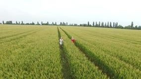Mujer dos con el pelo rubio en un vestido rojo y azul que corre en el campo con trigo almacen de metraje de vídeo