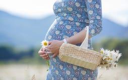 Mujer embarazada en campo con la cesta de margaritas blancas Imágenes de archivo libres de regalías