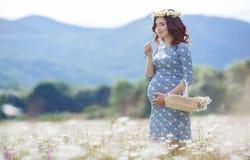 Mujer embarazada en campo con la cesta de margaritas blancas Fotos de archivo