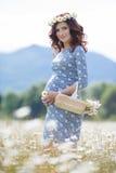 Mujer embarazada en campo con la cesta de margaritas blancas Imagenes de archivo