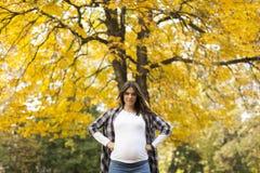 Mujer embarazada en el parque del otoño Fotos de archivo