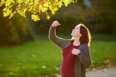 Mujer embarazada hermosa al aire libre en un día de la caída fotografía de archivo