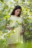 Mujer embarazada hermosa soñadora que camina en la primavera floreciente Garde Imagen de archivo