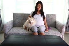 Mujer embarazada y animales domésticos lindos del perro pomeranian Foto de archivo