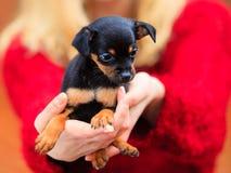 Mujer embrancing su perro de perrito Fotografía de archivo