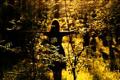 Mujer en bosque en la puesta del sol imagen de archivo libre de regalías