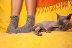 Mujer en calcetines hechos punto en el sofá con el gato de la esfinge Imagen de archivo libre de regalías