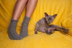 Mujer en calcetines hechos punto en el sofá con el gato de la esfinge Fotografía de archivo