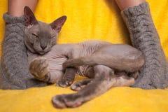 Mujer en calcetines hechos punto en el sofá con el gato de la esfinge Foto de archivo libre de regalías