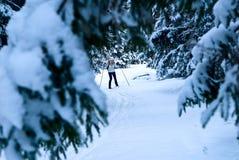Mujer en el bosque del invierno Fotos de archivo libres de regalías