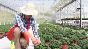 Mujer en el trabajo en invernadero con el espray, plantas del cuidado almacen de video