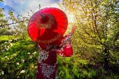 Mujer en el traje de Japón en la flor de cerezo Foto de archivo