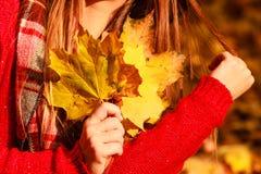 Mujer en hojas del oro de la cosecha del parque del otoño fotografía de archivo