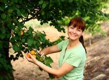 Mujer en jardín de la fruta imagen de archivo