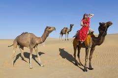 Mujer en la sari que monta un camello. Fotos de archivo