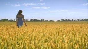 Mujer en paisaje del campo de trigo Tierra de la agricultura Oídos conmovedores del trigo de la muchacha almacen de video