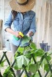 Mujer en pesticida de los esprayes del huerto en la hoja de la planta con la oruga, cuidado de las plantas para el crecimiento imagen de archivo
