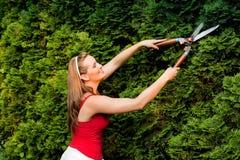 Mujer en seto del recorte del jardín Imagen de archivo libre de regalías