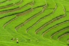 Mujer en terrazas del campo del arroz Imagenes de archivo