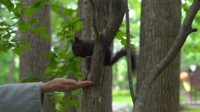 Mujer en un parque que alimenta en una ardilla Concepto de la interacción del ser humano y de la naturaleza metrajes