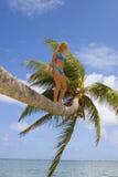 Mujer en una palmera Fotos de archivo