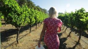 Mujer en viñedo australiano almacen de video