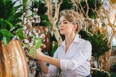 Mujer experta que toma el cuidado de mercancías en floristería Imagenes de archivo