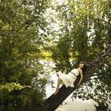 Mujer fina joven en árbol Foto de archivo libre de regalías