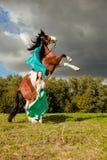 Mujer hermosa con un caballo en el campo Muchacha encendido Fotos de archivo