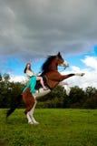 Mujer hermosa con un caballo en el campo Muchacha encendido Imagen de archivo libre de regalías