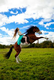 Mujer hermosa con un caballo en el campo Muchacha encendido Imagen de archivo