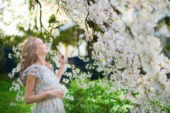 Mujer hermosa en jardín floreciente de la cereza Imagen de archivo libre de regalías